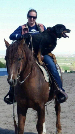 Melissa Michales riding Morgan stallion Apple Pi Dallas Magic